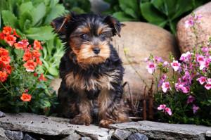 dog-friendly garden san diego ca