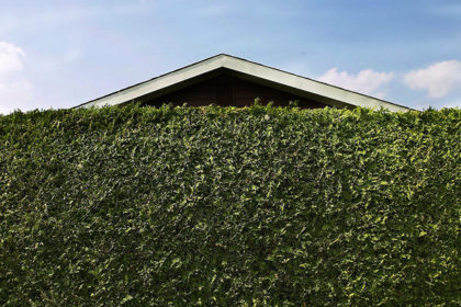 San Diego landscaping Hedge