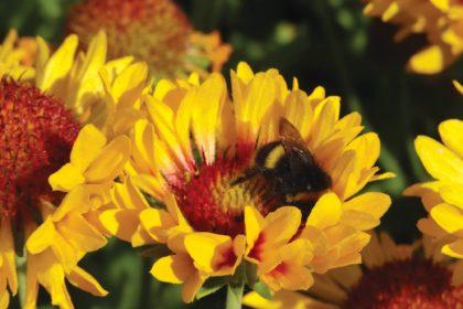drought tolerant plants San Diego CA