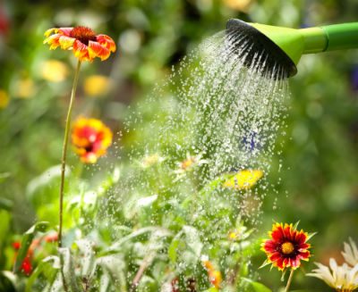 water saving landscaping tips San Diego, CA
